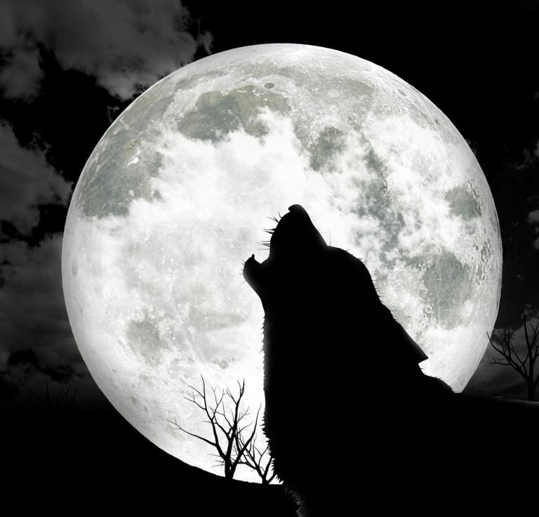 85-wolf